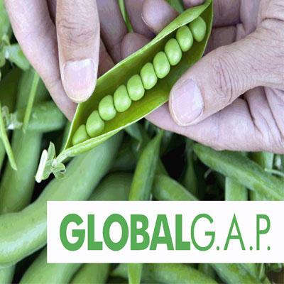 WAS IST GLOBALGAP?