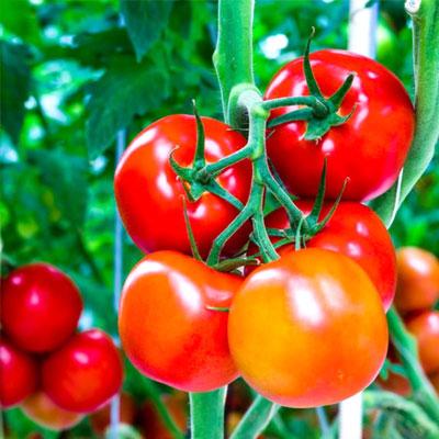Buona certificazione di pratiche agricole
